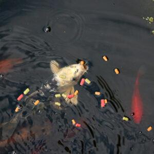 Плавающие корма